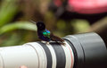 Velvet purple coronet boissonneaua jardini portrait of a curious colorful hummingbird perching on a photographer s lens mindo Stock Photography