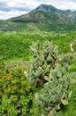 Venafrana valley spring landscape Royalty Free Stock Photo