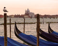 Venice a view with gondolas and giudecca island detail of berthed gondola sitting gull Royalty Free Stock Image