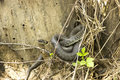 Venomous viper snake basking in the sun near reservoir and at same time to hunt for food Stock Images
