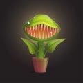 Venus flytrap flower carnivorous plant illustration Royalty Free Stock Photo