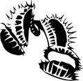 Venus Flytrap Monochrome Vector Illustration, Dionaea Muscipula Royalty Free Stock Photo