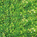 Verdant plant background Royalty Free Stock Image