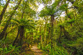 Verdant trail in a sub tropical forest the pororari track paparoa national park new zealand Royalty Free Stock Images