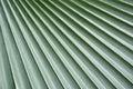 Verde natural da folha de palmeira Fotografia de Stock Royalty Free