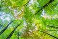 Verde pasado Imagen de archivo libre de regalías