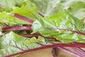 Verdes de remolocha sanos Imagen de archivo libre de regalías