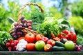 Verduras orgánicas frescas en cesta de mimbre en el jardín Fotos de archivo
