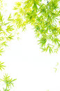 The verdure bamboo foliage Royalty Free Stock Photos