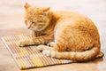 Vermelho alaranjado calmo tabby cat male kitten sleeping in sua cama sobre Fotos de Stock
