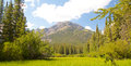 Vermillion lakes fernland view on the green fern land of near banff alberta canada with the canadian rocky mountains in the Royalty Free Stock Photo