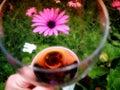 Verre sirotant de temps de thème de shiraz red wine garden flower au printemps Image libre de droits
