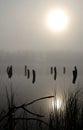Vertical foggy lake landscape Royalty Free Stock Photo
