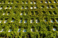 Vertical garden on wall Royalty Free Stock Image