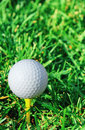 Vertical of golf ball and grass Royalty Free Stock Photo
