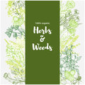 Vertical green banner with color medicinal herbs and flowers on white background