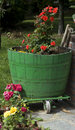 Vertical of Green Wine Barrel Flower Pot in Italy Royalty Free Stock Photo
