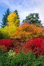 Vertical image trees in bright colors of fall autumn foliage, Royalty Free Stock Photo