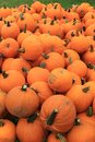 Vertical images of Fall`s bounty, with numerous pumpkins set out for shoppers at local market Royalty Free Stock Photo