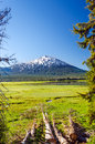 Vertical mount bachelor as seen through a clearing of trees near bend oregon Stock Images