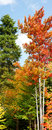 Vertical panorama of fall forest Royalty Free Stock Photo