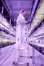 Vertical Plantation Greenhouse
