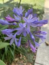 Vertical Shallow Focus Closeup Shot Of A Purple Agapanthus Flower In A Park