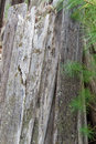Vertical Stack of Aged Boards Royalty Free Stock Photo