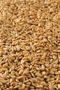 Vertical sunflower seed background a of hulled roasted and salted seeds Stock Photo