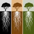 Vertical Tree Root Banner Set Royalty Free Stock Photo