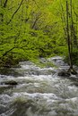 Vertical-A white water stream is surrounded with greenery in the Smokies. Royalty Free Stock Photo