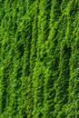 Verticle greenery climbing a building Royalty Free Stock Photo