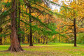 Very beautiful autumn landscape of forest mixed Stock Photo