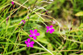 Very beautiful and colourful flowers bloom in the field