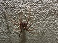 A very beautiful spider on the wall