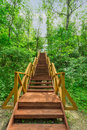 Very comfortable stairs up in the woods