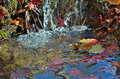 Very small riffle a close up of the on river with autumn leaves in jets Royalty Free Stock Image
