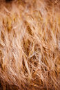 Very soft grass so close or Royalty Free Stock Images