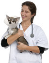 Vet carrying a Chihuahua wearing a space collar Royalty Free Stock Images