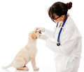 Vet checking a puppy dog Royalty Free Stock Photo
