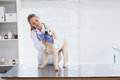 Vet checking a small dog in her office Royalty Free Stock Photos