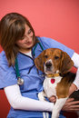 Vet Checkup Royalty Free Stock Photo