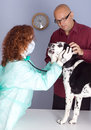 Vet With Dog and owner In Surgery Royalty Free Stock Photos