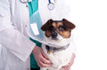 Vet with dog Royalty Free Stock Photo
