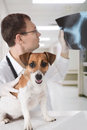 Vet with dog and x-ray Stock Images