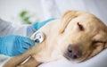 Vet examination sick dog