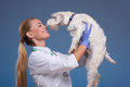 Vet holding a cute dog above head Royalty Free Stock Photo