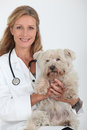 Vet with a small dog Stock Images