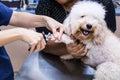 Vet trim cut dog nails at clinic Royalty Free Stock Photo