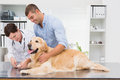 Vet using nail clipper on a dog with its owner in medical office Stock Photos